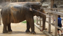 Lucky, the San Antonio Zoo's oldest elephant, celebrates her 60th birthday